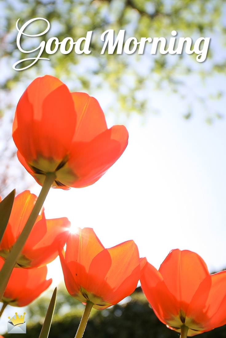 Good Morning Orange Flowers : Good morning cards to boost your
