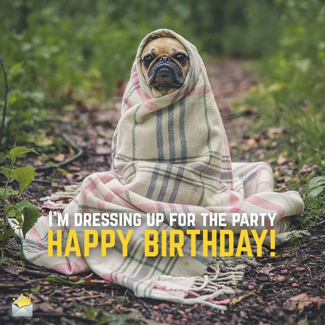 I'm dressing up for the party. Happy Birthday!