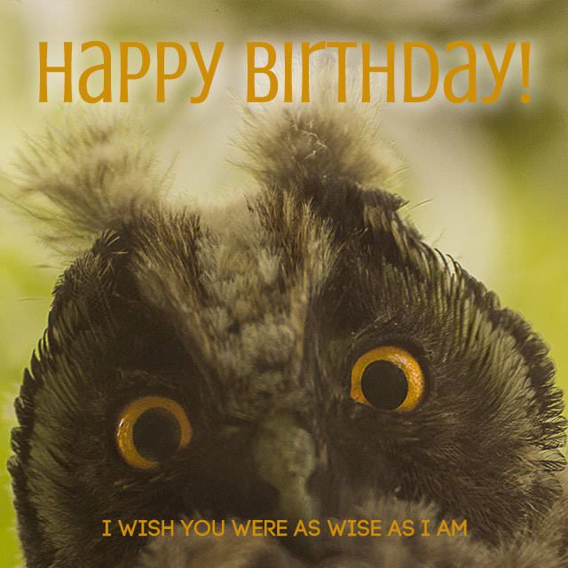 Happy-Birthday-I-wish-you-were-as-wise-as-I-am