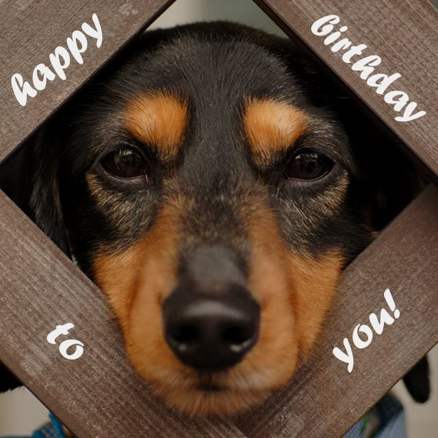 Happy Birthday to you - cute dog