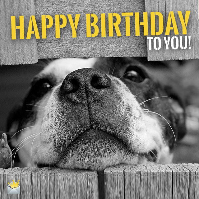 2 Words From Cute Animals Happy Bday Cute Birthday Wishes Animals Wishing Happy Birthday