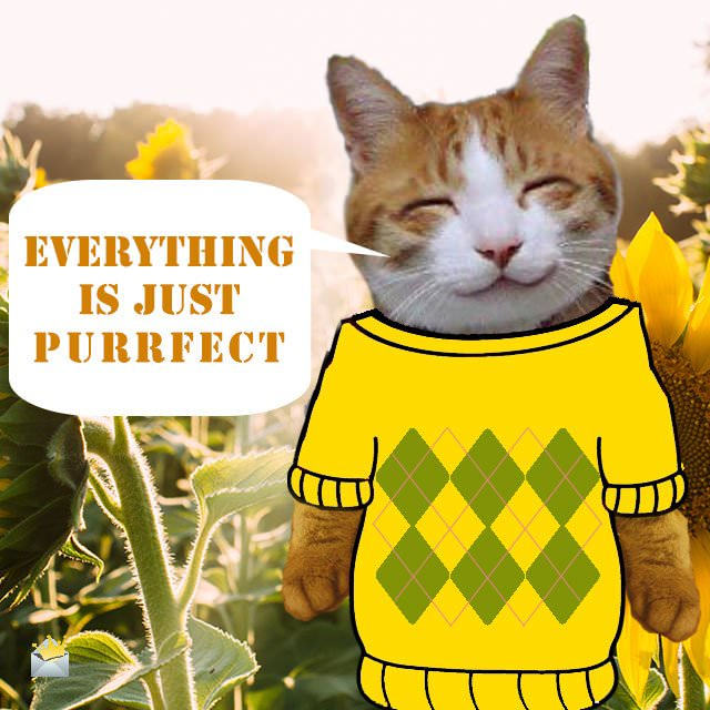 Everything-is-just-purrfect