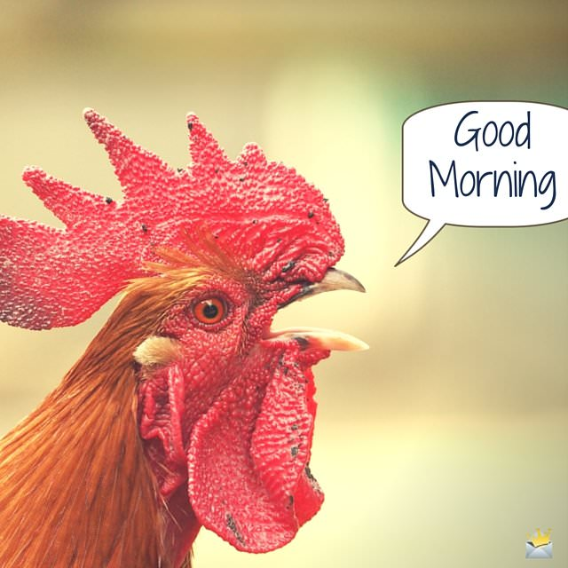 Good Morning Image with Rooster