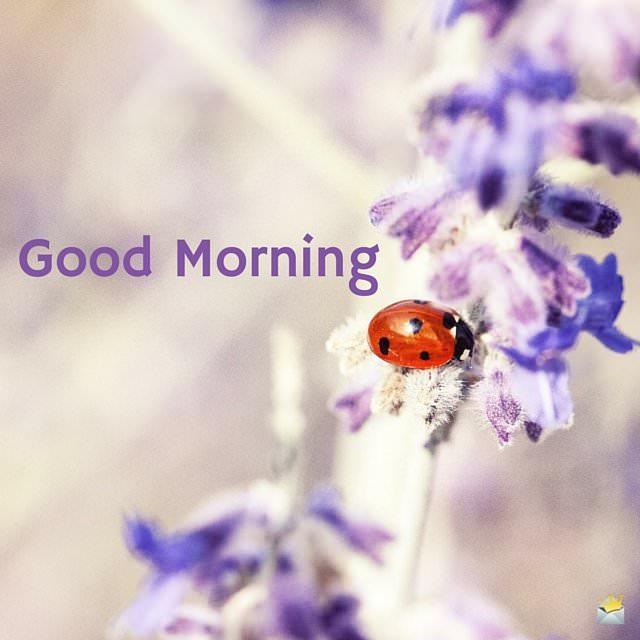 Good Morning Image with lady bug