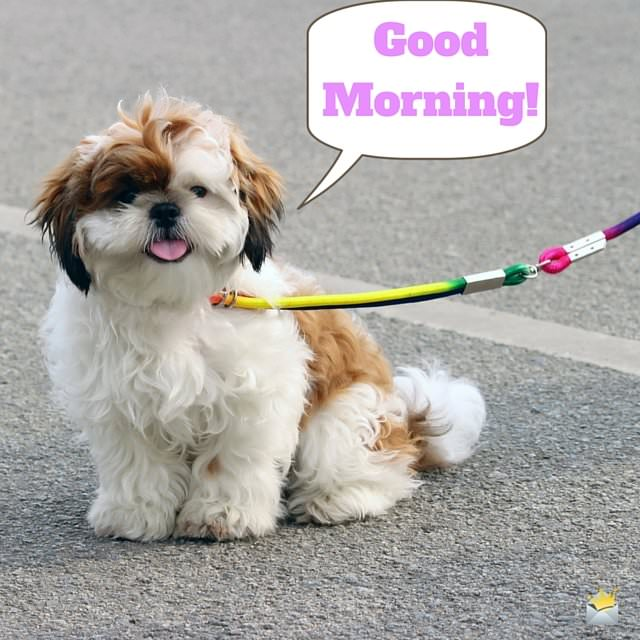 Good Morning image with fluffy little dog
