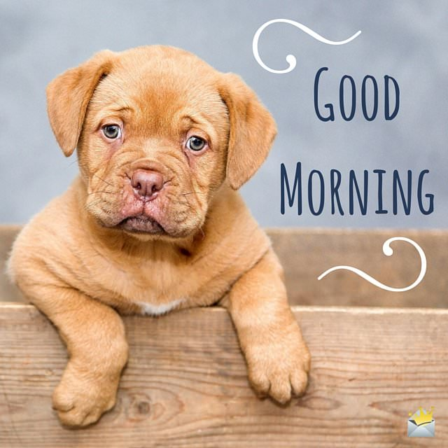 Good Morning Image with cute puppy
