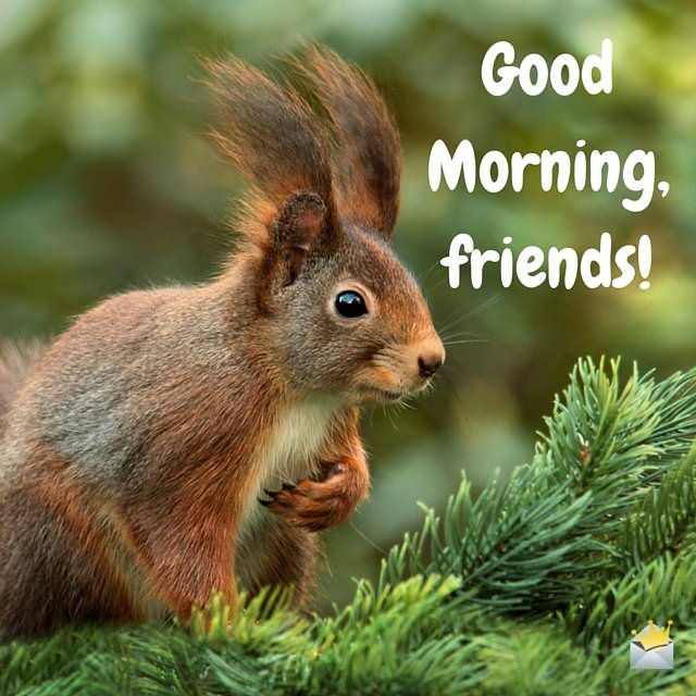 Good morning image for facebook with squirrel