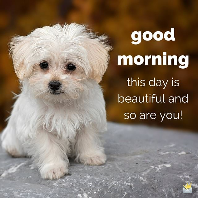 Good morning image with puppy