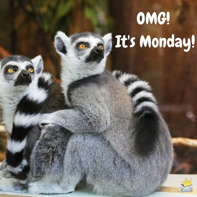 Monday Quote with cute animals