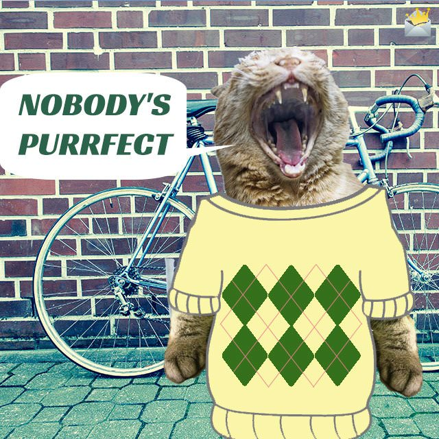 Nobody-s-purrfect
