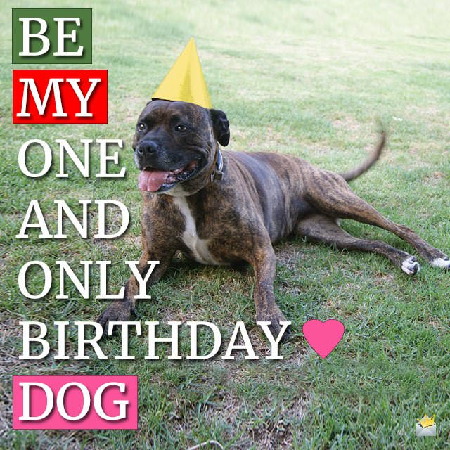 Be my one and only birthday dog