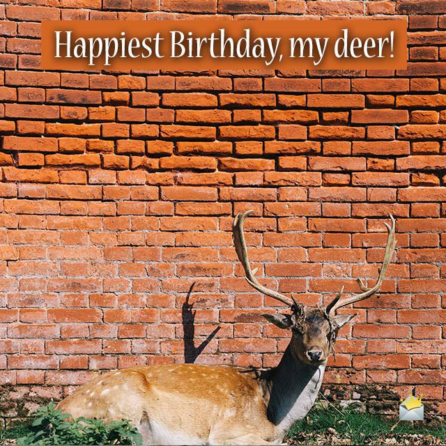 Happiest Birthday, my deer!