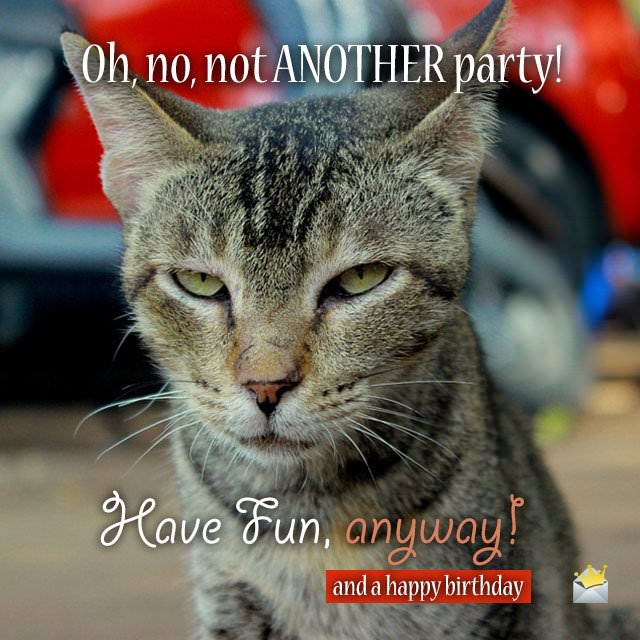 Oh, no, not another party! Have fun anyway, and a happy birthday.