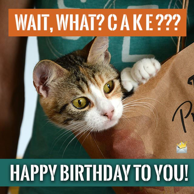 Wait. what? Cake??? Happy Birthday to you!