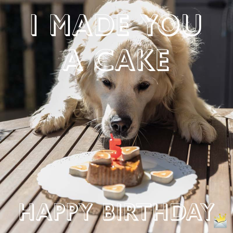32 Loyal Birthday Wishes For Dog Lovers