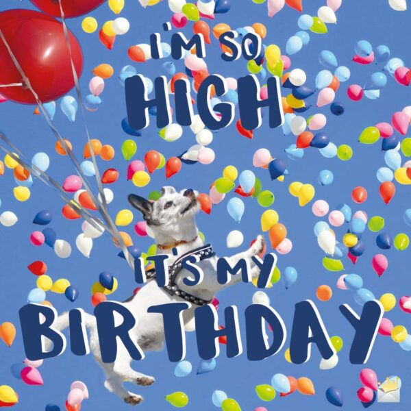 I'm so high, it's my birthday!