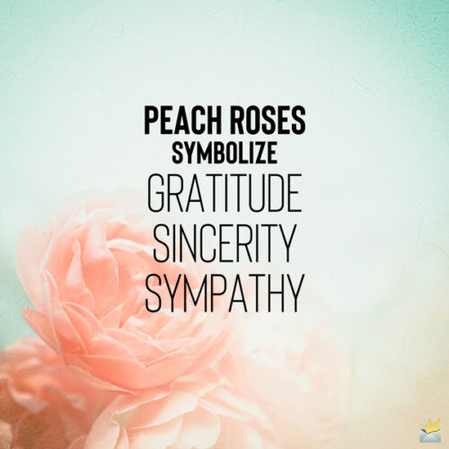 An image that explains what peach roses symbolize.