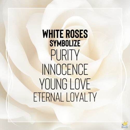 An image that explains what white roses symbolize.