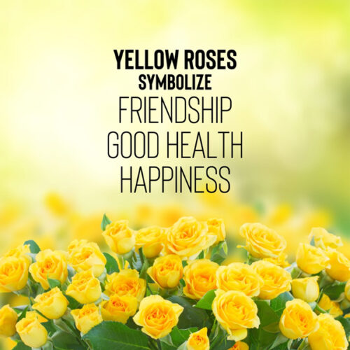 An image that explains what yellow roses symbolize.