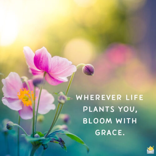 Good morning quote on an image with flower that you can share.