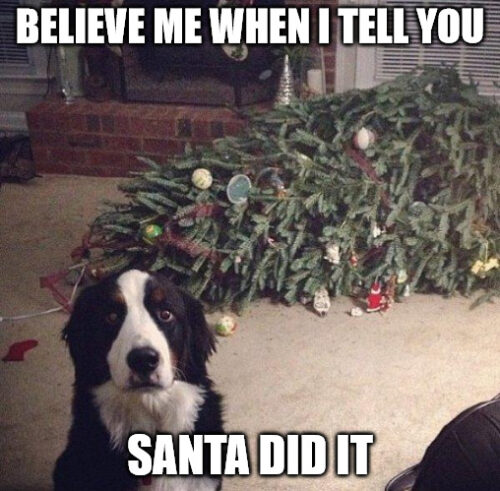Believe me when I tell you Santa Did it - Dog Christmas Meme