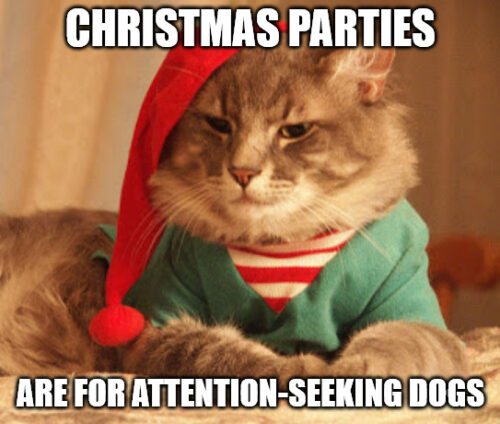 Christmas parties are for attention-seeking dogs - Christmas cat meme
