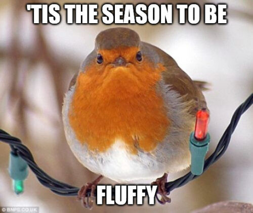 Tis The Season to be Fluffy - Sad Bird Christmas Meme