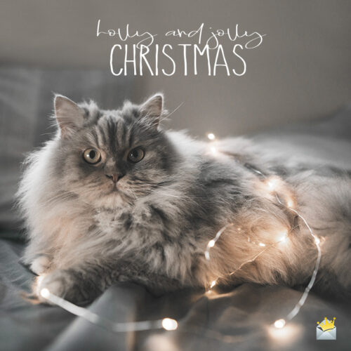 Christmas picture with cute cat.