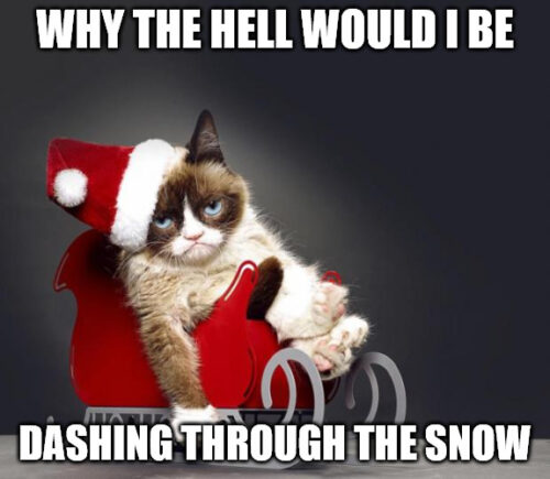 why the hell would I be dashing through the snow - Grumpy Christmas Cat Meme