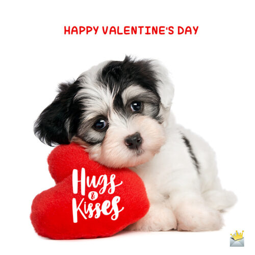 Cute Valentine's day image with puppy.