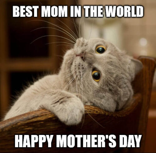 Mother's Day Funny Cat meme.