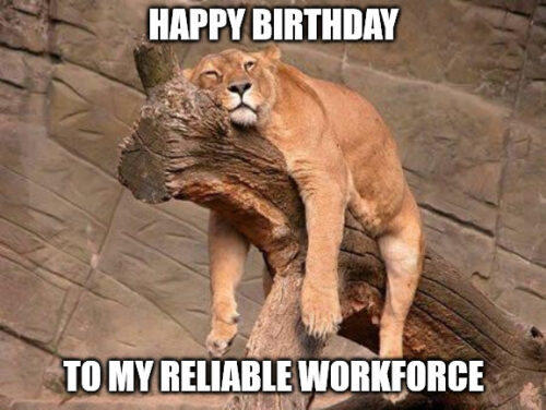 Sleeping Lion Husband's birthday meme.