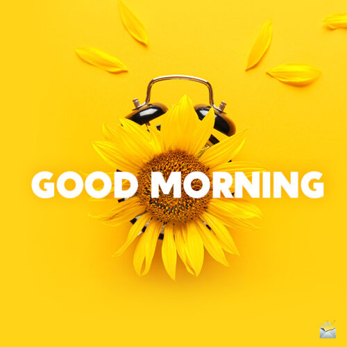 Good morning image with sunflowers.