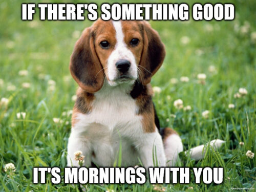 Good morning how are you meme with cute puppy.