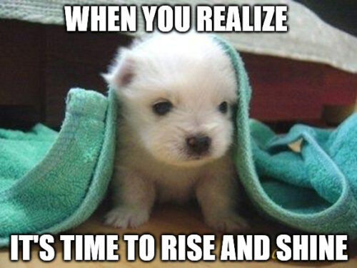 Cute Morning Puppy meme.