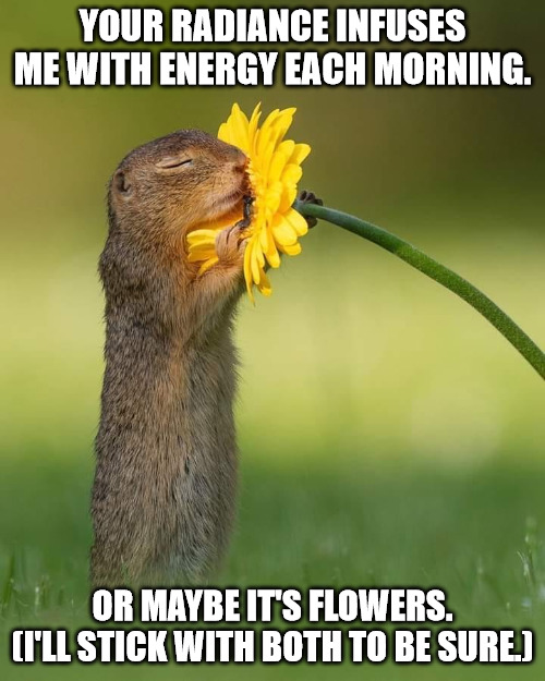Cute Good Morning Meme.