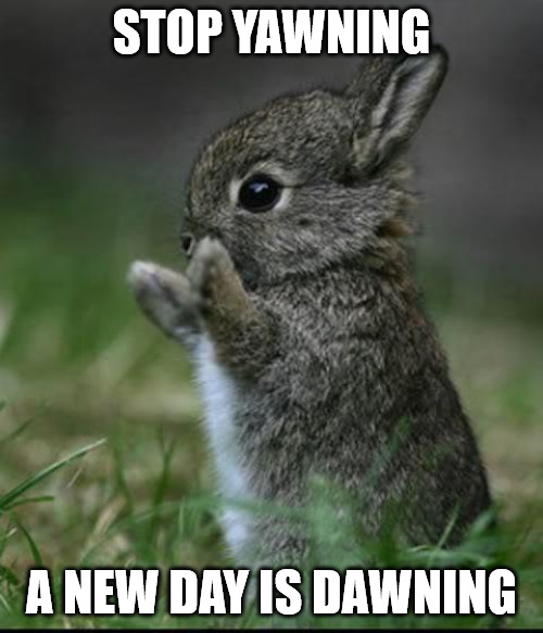 Cute Morning Bunny Meme.