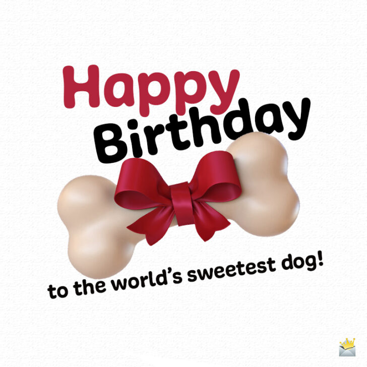 Happy Birthday to Woof | Birthday Wishes for Dogs