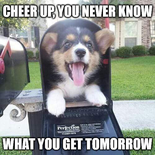 Cute doggo in mailbox Meme to Cheer you up
