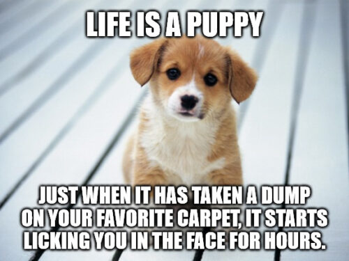 Life is a puppy Cheer Up meme.