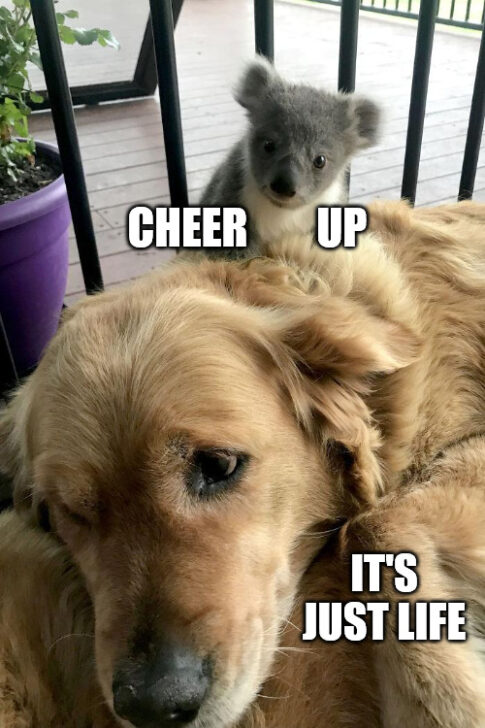 Rescue Dog Meme to Cheer them up