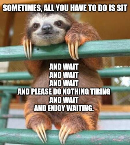 Sit and Wait cute-sloth Meme to Cheer you up